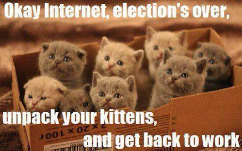 Election is over!  Bring back the kittens, ASAP!  LOL!  (source ——> I found this on Pinterest; it's a random)