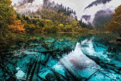mirkokosmos:  Five Colour Lake, Jiuzhaigou Valley / China