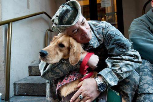 menandtheirdogs:  Today we honor our Veterans, and remember those who have served and sacrificed. Photo via East Coast Assistance Dogs, Inc.