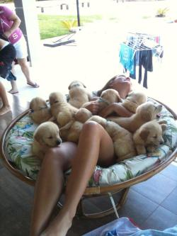 bridlesandbows:  this must be what heaven looks like