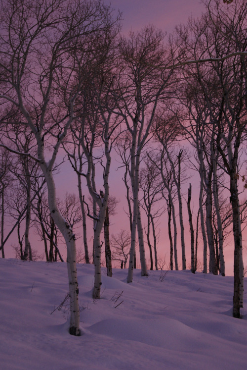b0n-iver:  b0n-iver:  Aspen trees at dawn   it be back on my dash