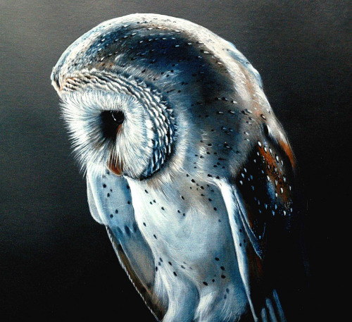 definitelydope:  Barn Owl 1 (by Buzzard2001)