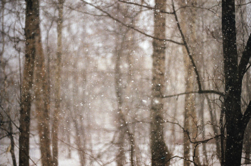 forbiddenforrest:  untitled by nadya ka on Flickr.