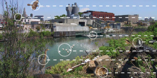 Collage compilation of birds and animals found in the Gowanus canal with leaders for easy identification and visualization.