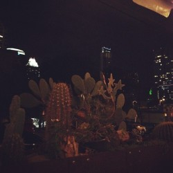 Star cactus  (at Ranch 616)