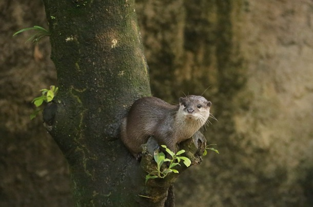 dailyotter:  Otter Can See Far and Wide from His Perch Via Beginners' Blog Otter  this is awesome