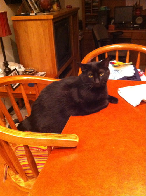 fashionleadstopassion:  This is kitty, he sits pretty for dinner,he's an idiot