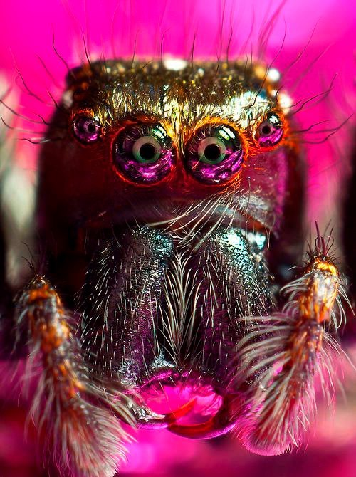 aliealiealieee:  ophthamovntn:  BOO  what a pretty spider