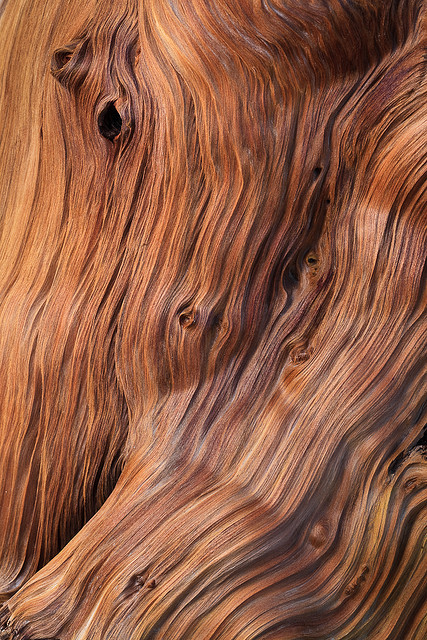 valscrapbook:  Bristlecone Pine wood by Lee Rentz on Flickr.       (via TumbleOn)