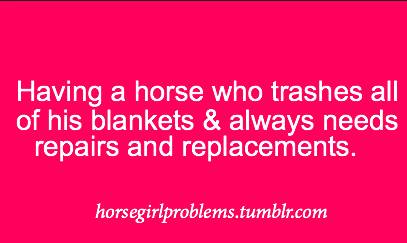 horsegirlproblems:  submitted by: fiftyshadesofdapplegray
