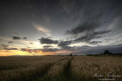 Evening Fields  via Martin_Finlayson
