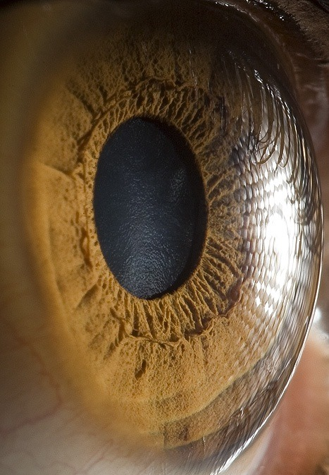 socialismartnature:  Extreme close-ups of human eyes by Suren Manvelyan  Here's looking at you. Eyed say you'll have a hard time unseeing these amazing photos.