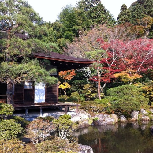 #autumn #kyoto #japan #fall #beautiful  (at 銀閣寺 (慈照寺) Ginkaku-ji)