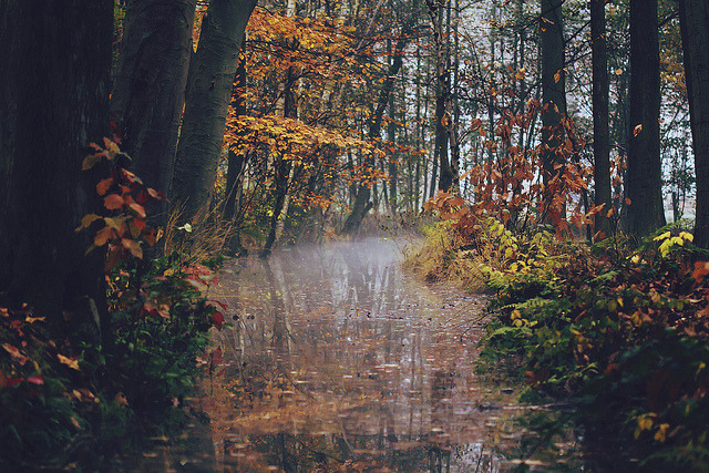 greekg0ds:  Autumn creek