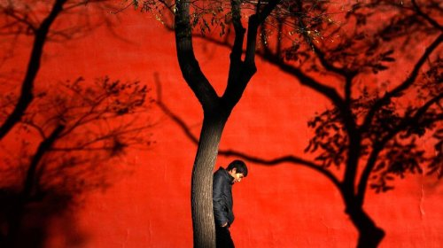 THROWIN' SHADE  Shadows of trees are cast onto a wall of the Forbidden City as a man walks past on a cold, sunny day in Beijing on November 13, 2012.  (Photo: David Gray / Reuters via NBC News)