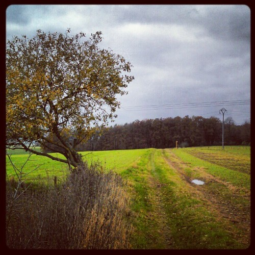 #novembre #tree #field #path #wood #clouds