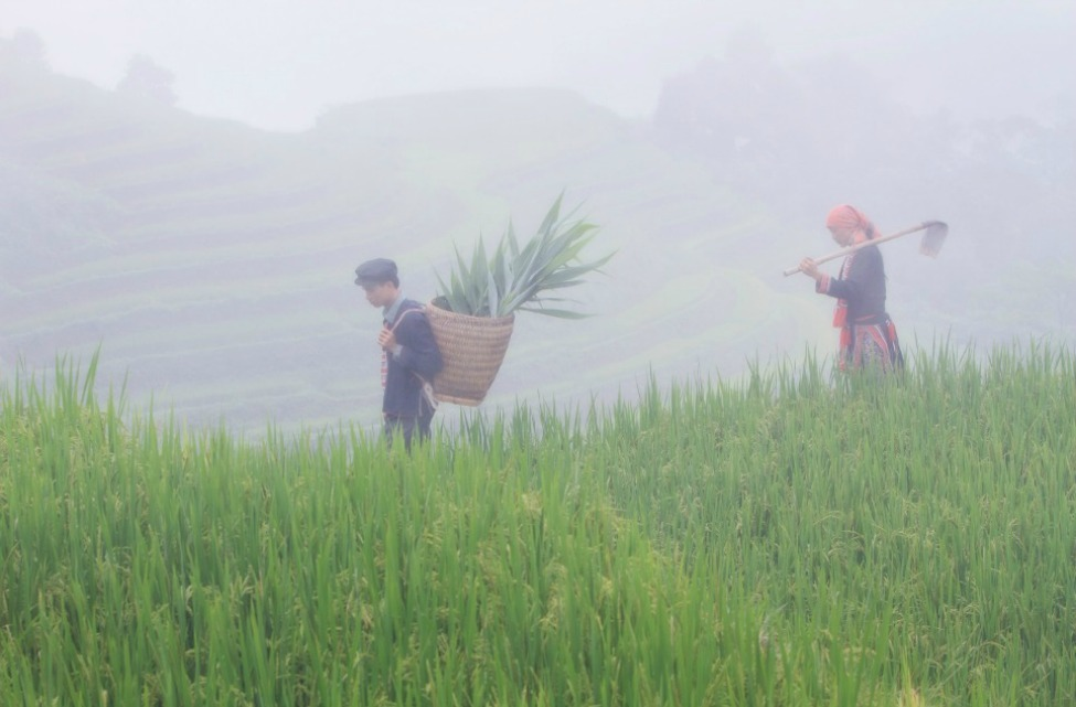 Photo of the Day: Husband and Wife Examined Rice Fields Before Harvest Season Coming.  Photo by: Vo Anh Kiet (HCM City, Vietnam); Hoang Su Phi, Ha Giang - Vietnam.