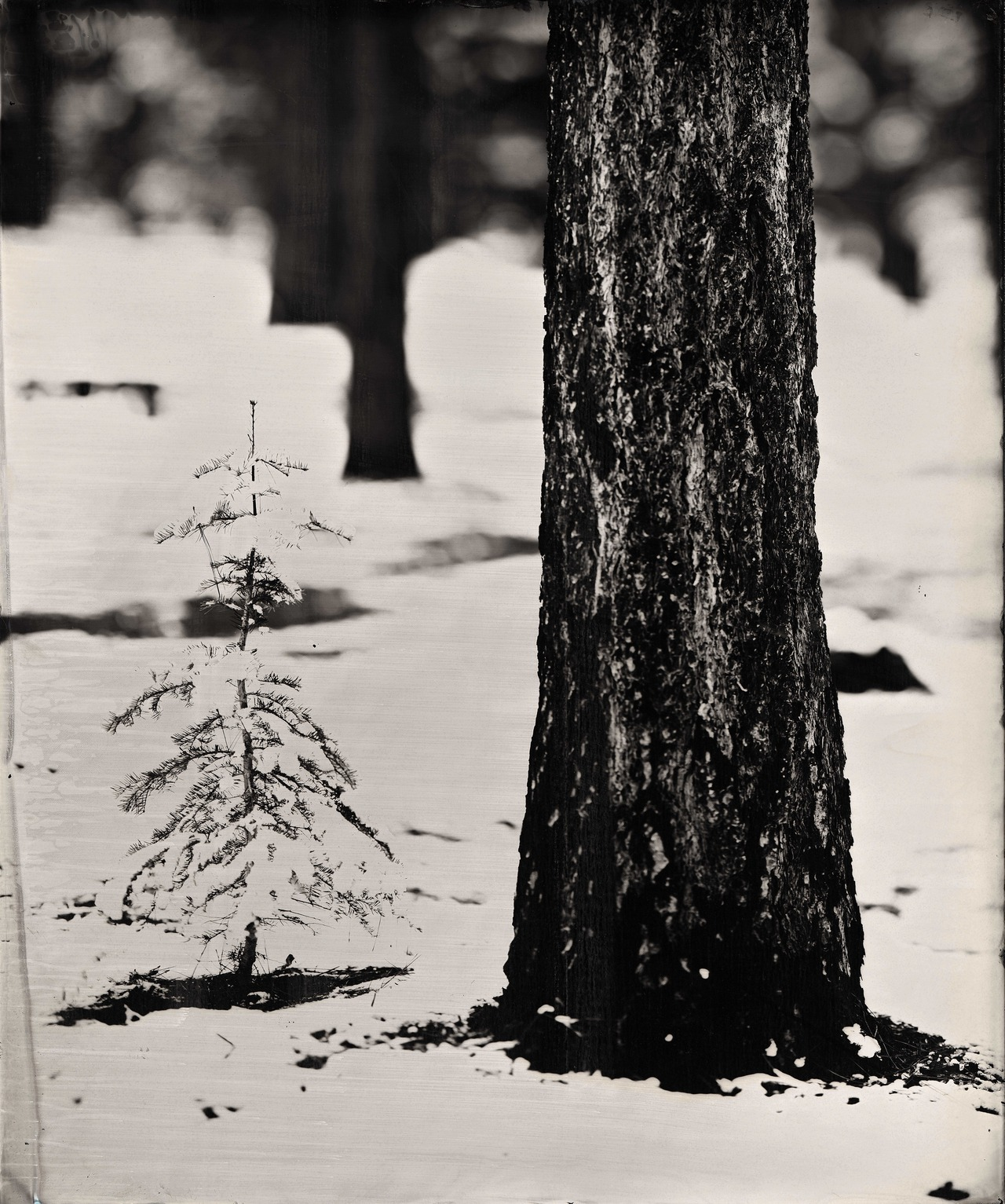 "Ian Ruhter/ Wet Plate Collodion /24"" x30""/ First snow /Lake Tahoe Ca, 11.13.2012"