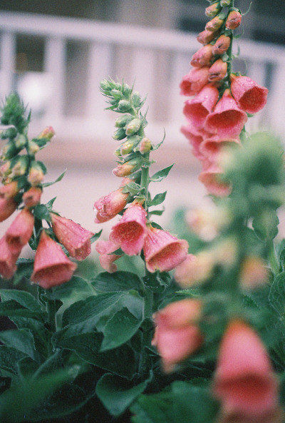floralls:  (by [Anna Peters])