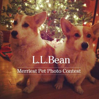 L.L.Bean's Pet Photo Contest on Facebook starts today!