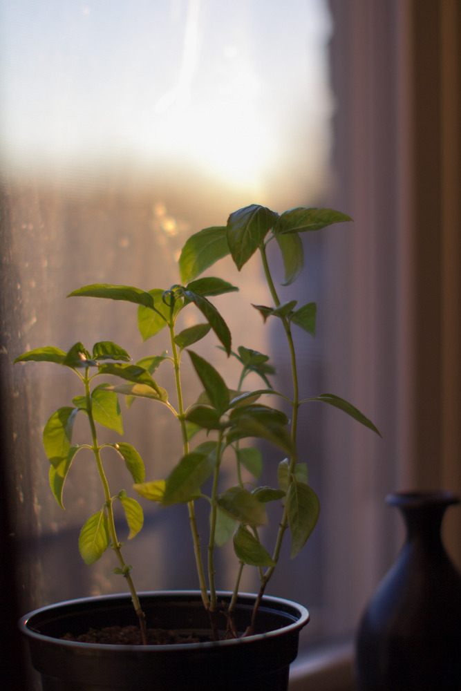 Basil has the best view, and light.