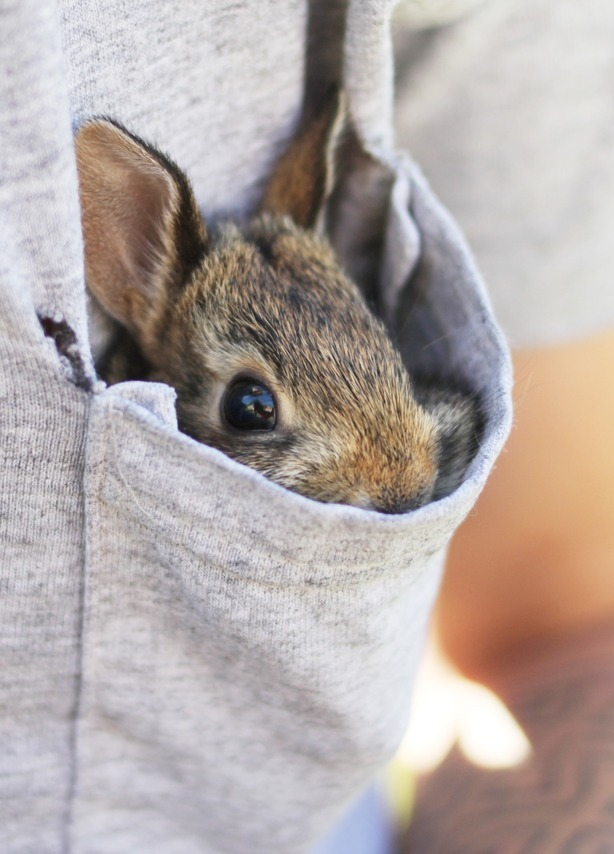 if-life-takes-me-far-away:  It's a bunny in a pocket…