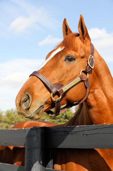 Curlin (Photo by Anne M. Eberhardt)