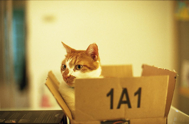 The cat in the box on Flickr.Canon AE1, Agfa Vista 400