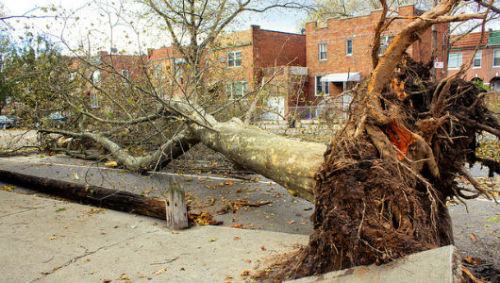 Sandy's devastating tree legacy, and what homeowners can do to prevent a 'next time'During storm season, trees can become a treacherous liability, but there are ways homeowners can keep the beauty and shed the fear by following a few simple rules.