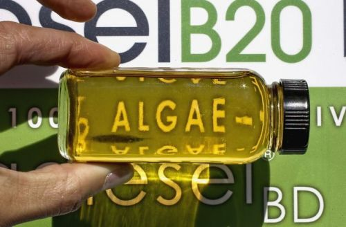Algae fuel for sale in Bay Area