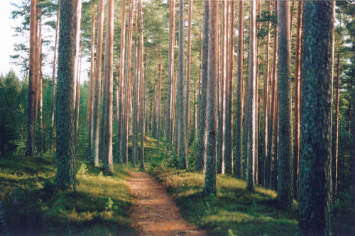 lensblr-network:  The woods of Svabensverk, Sweden by Daniel Alfredsson  (danalfred.tumblr.com)