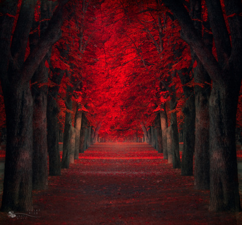 """Endless passion"" by Ildiko Neer"