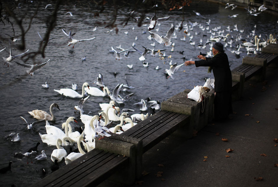 An elderly woman feeds birds at the lake Zurich in Switzerland November 13, 2012. [Credit : Michael Buholzer/Reuters]
