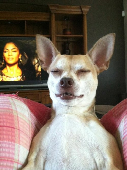 "Dog Does Spot On Impression of Nicole Scherzinger From the single ""Hush-Hush Puppies""."