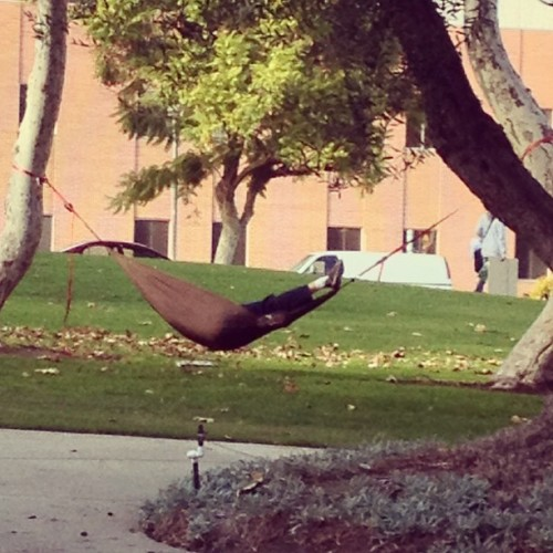 I need to get me one of those. #cpp #hammock  (at CPP Quad)