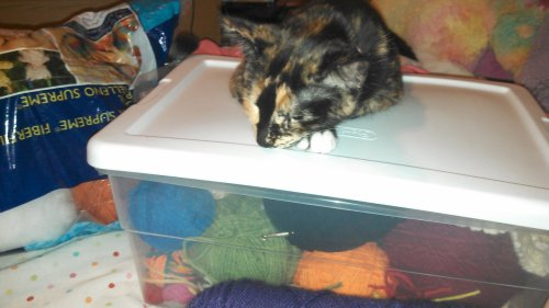 get off of there cat. i got that box to put my crochet stuff in because you wouldn't stay off my yarn, and you've still found a way to be on it! i admire your persistence but i need to get something out of there.