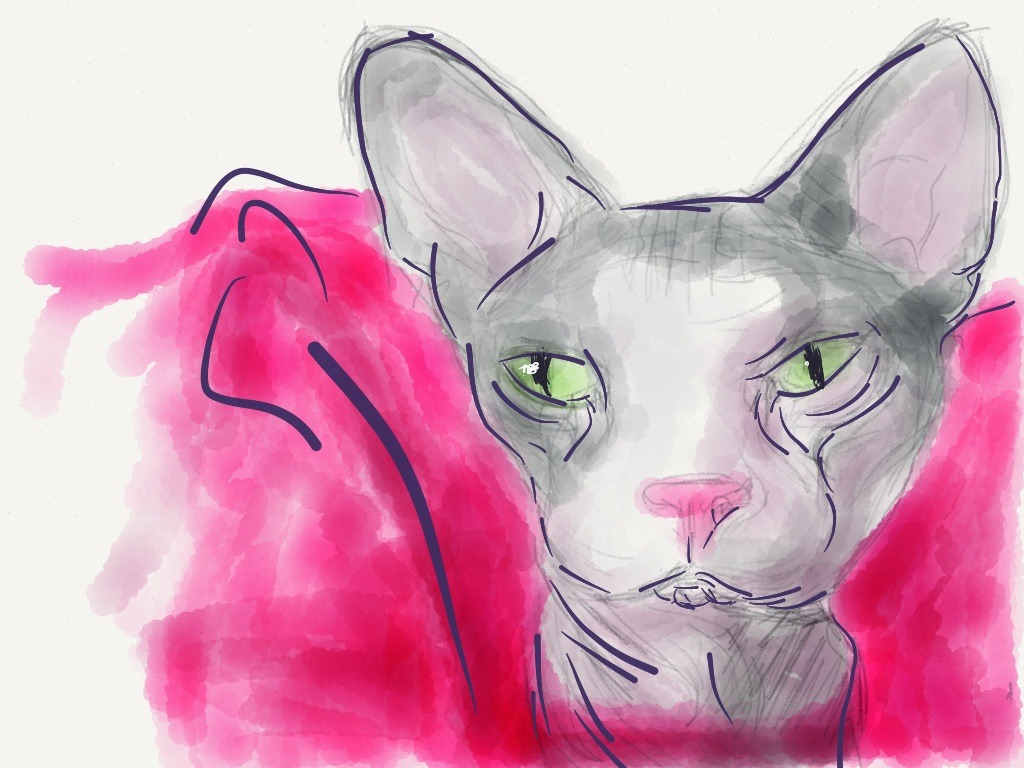 Made with Paper  My cat, Eloise. She's a Sphynx :)