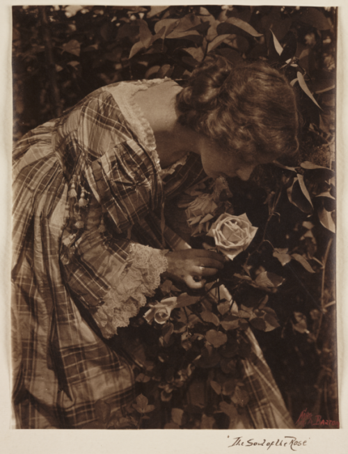 The Soul of the Rose c. 1905 by Emma Barton [see also]