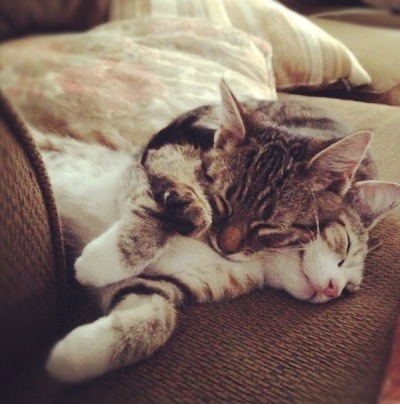 kittenskittenskittens:  Riggins and Eloise
