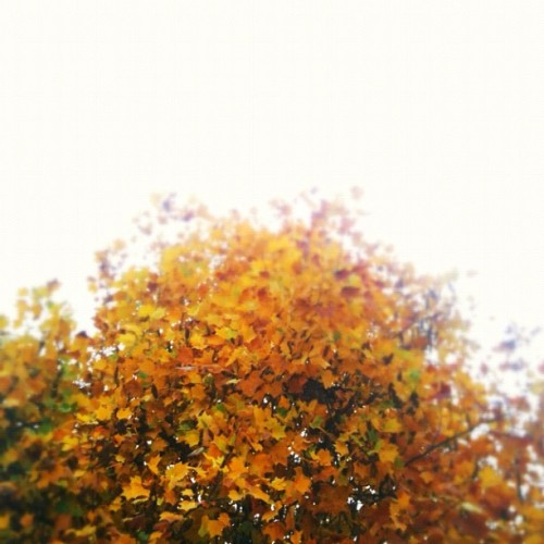 #morhernature #iloveyellow #autumn
