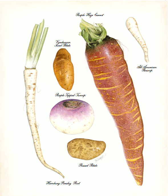 This December Town & Country suggests buying your winter vegetables at your local farmers market, or planting them for a jump-start on next year's feast.  Illustration by John Burgoyne