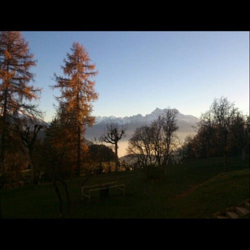 #autumn #fall #leysin #swiss #Switzerland #Suisse #shms #view #trees #mountain #sky #snowcap #afternoon