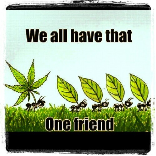 Haha so true #friends#ants#weed#marijuana#pot#prop215#funny