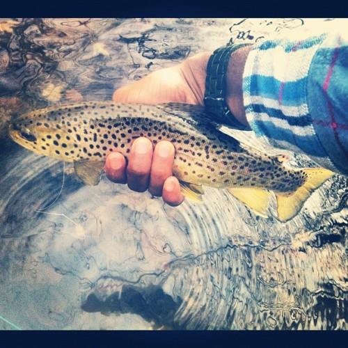 First #browntrout #flyfishing