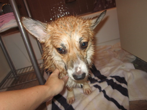 She had a bath, and hated every moment of it. :[