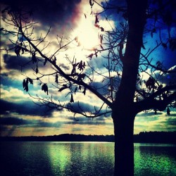 #tree #sun #sunset #lake #river #water #waterfront #nature #natural #fall #autumn #earth #clouds #sky #beautiful #colorful