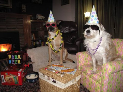 funnyordie:  Party Animals  LOL