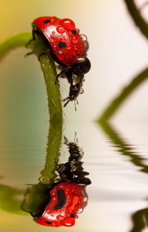 "earth-song:  earth-song:  ""Reflejos"" by Alejandro Ferrer Ruiz"