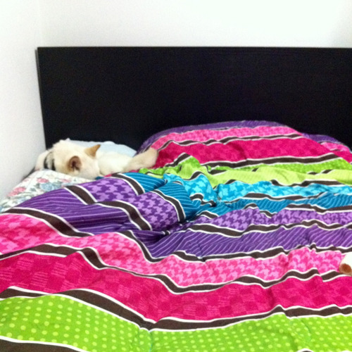 Casper's favorite spot on my bed