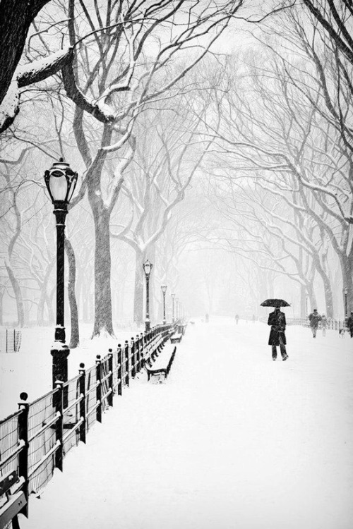 Snowy Day, Central Park, New York City photo via vickey